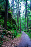 Bosque en Suiza sajona 1 fotos de archivo