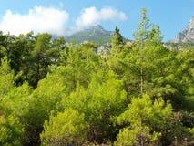 Bosque en Taurus Mountains en Turquía Foto de archivo