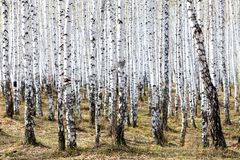 Bosque en tiempo de primavera Imagenes de archivo