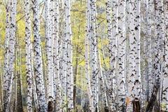 Bosque en tiempo de primavera Fotografía de archivo libre de regalías