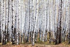 Bosque en tiempo de primavera Imágenes de archivo libres de regalías