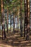 Bosque en tiempo soleado Fotos de archivo libres de regalías
