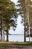Bosque en tiempo soleado Fotografía de archivo libre de regalías