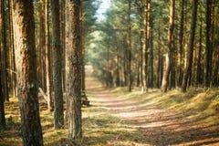 Bosque en un día soleado, con un foco en el primero plano Imagen de archivo libre de regalías