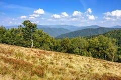 Bosque en un lado de la colina de la montaña Fotos de archivo