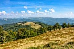 Bosque en un lado de la colina de la montaña Imagenes de archivo