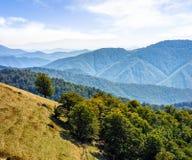 Bosque en un lado de la colina de la montaña Foto de archivo libre de regalías