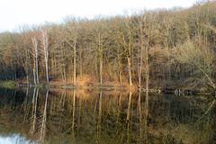 Bosque en un lago antes de la puesta del sol Fotografía de archivo