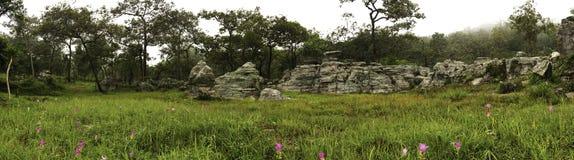 Bosque en un paisaje del panorama de la primavera, Foto de archivo libre de regalías