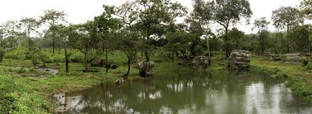 Bosque en un paisaje del panorama de la primavera Fotografía de archivo