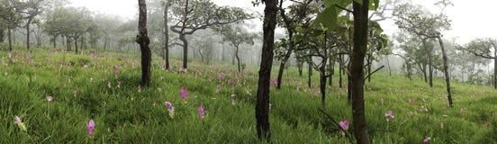 Bosque en un paisaje del panorama de la primavera Fotos de archivo libres de regalías