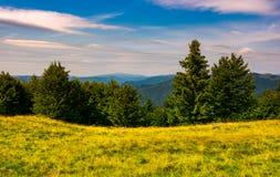 Bosque en un prado herboso en montañas Foto de archivo libre de regalías
