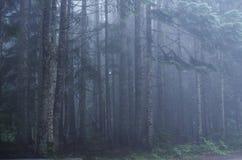 Bosque en una neblina de niebla imagen de archivo