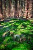 Bosque en verano Fotografía de archivo