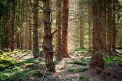 Bosque en verano Foto de archivo