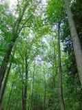 Bosque en verano Imágenes de archivo libres de regalías