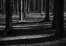 Bosque en Yasnaya Polyana fotografía de archivo libre de regalías