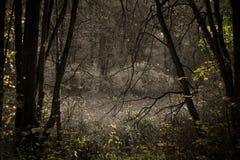 Bosque en Yasnaya Polyana Fotos de archivo libres de regalías