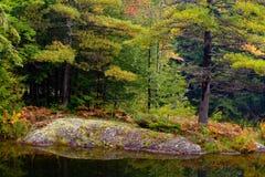 Bosque encantado - árboles en rocas Fotografía de archivo