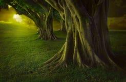 Bosque encantado Imagen de archivo