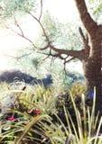 Bosque encantado Imagenes de archivo