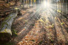 Bosque encantado fotografía de archivo