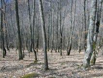 Bosque encantado Imágenes de archivo libres de regalías