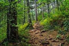 Bosque encantado 3 Foto de archivo libre de regalías
