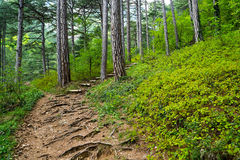 Bosque encantado 2 Imagen de archivo