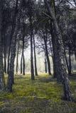 Bosque encantado Stock Afbeeldingen
