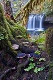 Bosque encantado con la cascada foto de archivo libre de regalías