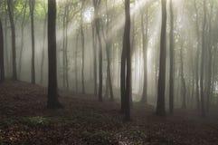 Bosque encantado de la fantasía con la luz Fotografía de archivo libre de regalías