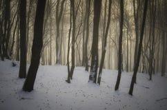Bosque encantado en invierno Imagen de archivo libre de regalías