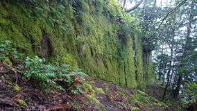 Bosque encantado en la isla de Pender Imagenes de archivo