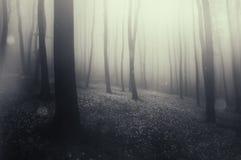 Bosque encantado mágico con niebla y luz extraña Foto de archivo libre de regalías