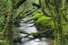 Bosque encantado, parque nacional de Queulat, Chile foto de archivo libre de regalías