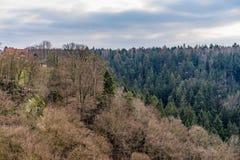 Bosque encendido en Sudetenland, creciendo en las montañas de la piedra arenisca Fotografía de archivo libre de regalías