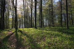Bosque encendido profundamente su. Fotografía de archivo