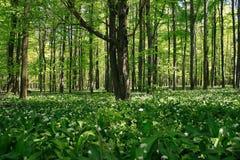 Bosque encendido profundamente su. Imágenes de archivo libres de regalías