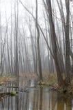 Bosque enevoado Imagens de Stock Royalty Free