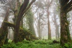 Bosque engullido por la niebla, San Francisco Bay, California imagenes de archivo