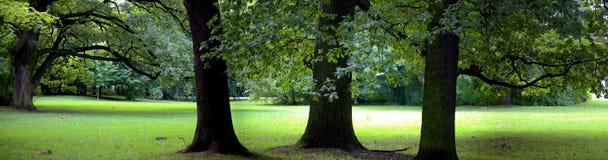 Bosque enorme Foto de archivo libre de regalías