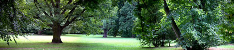 Bosque enorme Fotos de archivo libres de regalías