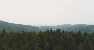 Bosque enorme contra el cielo metrajes