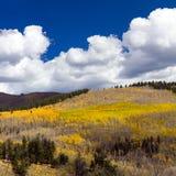 Bosque enorme de la caída en las montañas de Colorado Fotografía de archivo libre de regalías
