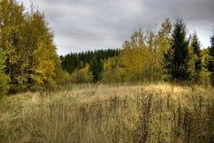 Bosque escénico Imagenes de archivo