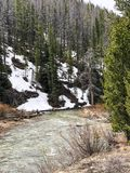 Bosque escénico de la montaña con la corriente en Colorado foto de archivo