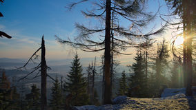 Bosque escarchado Imagenes de archivo