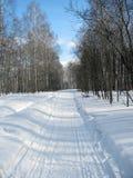Bosque escarchado Nevado en febrero Imagenes de archivo