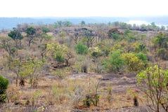 Bosque escaso Imagenes de archivo